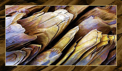 Driftwood Edges Poster by ABeautifulSky Photography