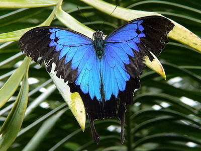 Dunk Butterfly In Oz Poster by D Scott Fern