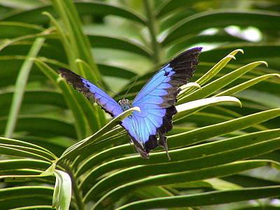 Dunk Butterfly Resting Poster by D Scott Fern