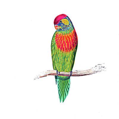 Edward Lear Versicolor Bird Poster by Munir Alawi