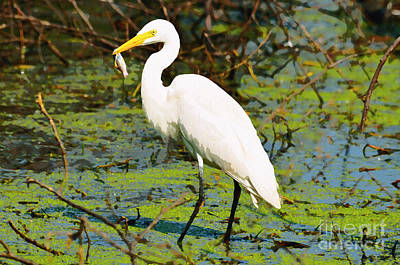 Egret With Fish  Poster by Manjot Singh Sachdeva