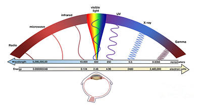Electromagnetic Spectrum Poster by Spencer Sutton