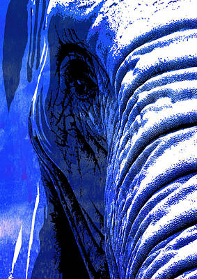 Elephant Animal Decorative Blue Wall Poster 7 - By Diana Van Poster by Diana Van