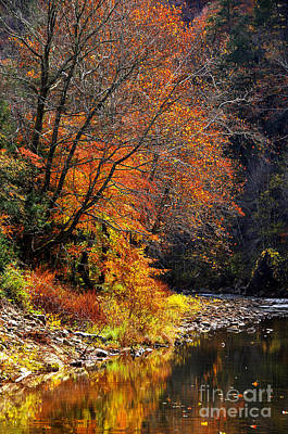 Elk River Autumn Poster by Thomas R Fletcher