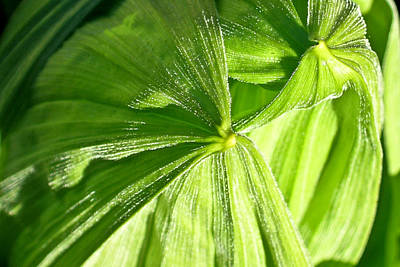 Emerging Plants Poster by Douglas Barnett