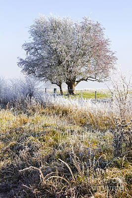 Enchanting Snow Covered Landscape Poster by Jorgo Photography - Wall Art Gallery