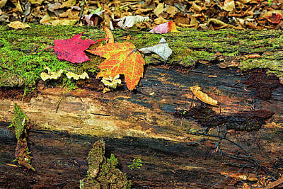 End Of Fall Poster by Janet Ballard