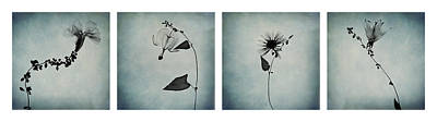 Essence Of Flowers Poster by Maggie Terlecki