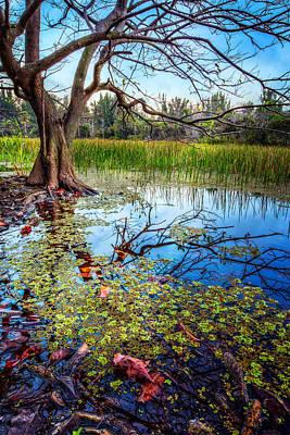 Everglades Reflections Poster by Debra and Dave Vanderlaan