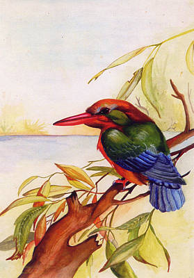 Extinct Birds The Kingfisher Poster by Debbie McIntyre