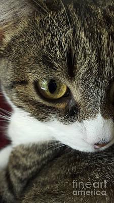 Eye Of Cat Poster by Bernard Jaubert