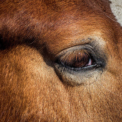 Eye Of The Horse Poster by Paul Freidlund