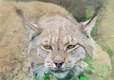 Eye To Eye With A Lynx In The Grass Poster by Elaine Plesser