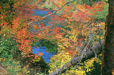 Fall Along The Upper Rogue Poster by Jim Nelson