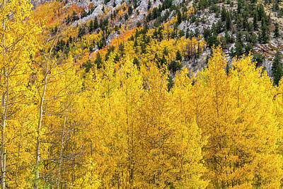 Fall Color And Snow In Colorado Poster by Teri Virbickis