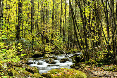 Fall Color Leatherwood Creek Poster by Thomas R Fletcher
