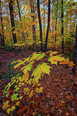 Fall Colors Poster by Rick Berk