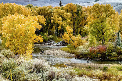 Fall Fishing In Colorado Poster by Teri Virbickis