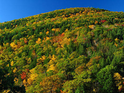 Fall Foliage Photography Poster by Juergen Roth