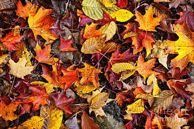 Fall Leaves On Forest Floor Poster by Elena Elisseeva