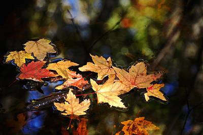 Fallen Leaves On Pond Poster by Debbie Oppermann