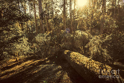 Fallen Tree In Foliage Poster by Jorgo Photography - Wall Art Gallery