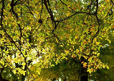 Fall's Unique Light Poster by Karen Musick