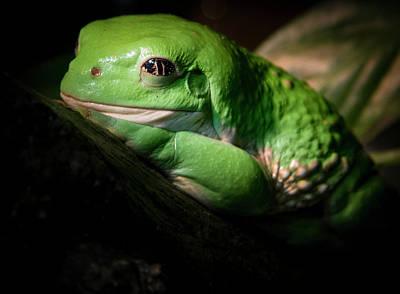 Fantastic Green Frog Poster by Jean Noren