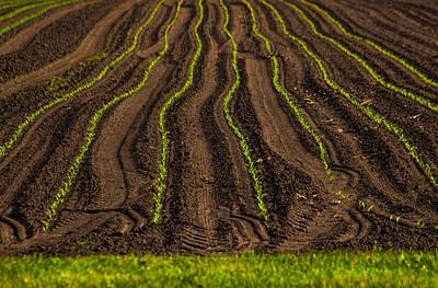Farming Lines Poster by Karol Livote