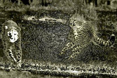 Fast And Slender Amazing Moves Of Cheetah Cub Poster by Miroslava Jurcik