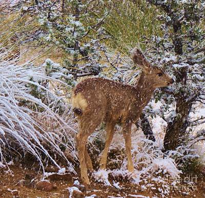 Fawn's First Snow Poster by Feva Fotos
