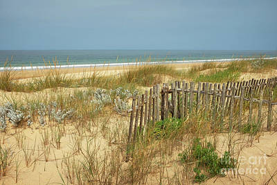 Fence In The Dunes Poster by Carlos Caetano