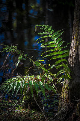 Fern And Cypress Poster by Marvin Spates