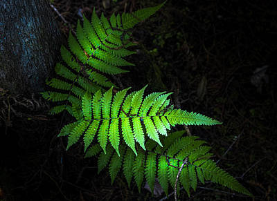 Fern Life Poster by Marvin Spates