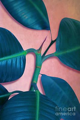 Ficus Elastica Poster by Mark Ashkenazi