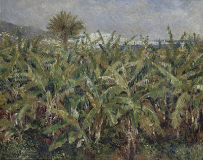 Field Of Banana Trees  Poster by Auguste Renoir