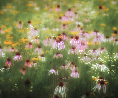 Field Of Coneflowers 5x6 Poster by James Barber