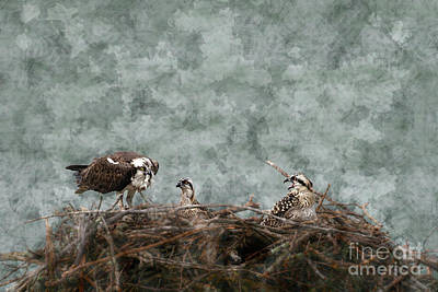 Fish Food For The Baby Osprey Poster by Dan Friend