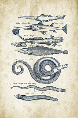 Fish Species Historiae Naturalis 08 - 1657 - 04 Poster by Aged Pixel