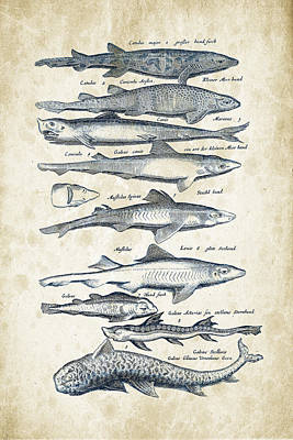 Fish Species Historiae Naturalis 08 - 1657 - 08 Poster by Aged Pixel