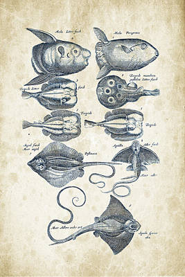 Fish Species Historiae Naturalis 08 - 1657 - 09 Poster by Aged Pixel