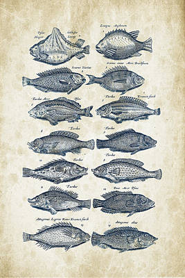 Fish Species Historiae Naturalis 08 - 1657 - 13 Poster by Aged Pixel
