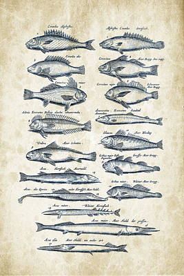 Fish Species Historiae Naturalis 08 - 1657 - 15 Poster by Aged Pixel