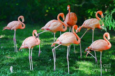 Flamingo Poster by Paul Ward
