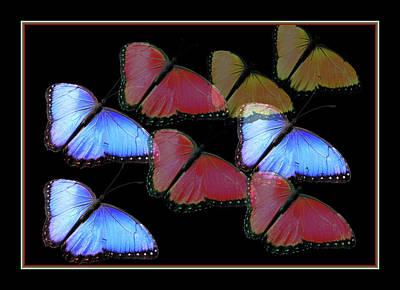 Flight Of The Butterflies Poster by Rosalie Scanlon