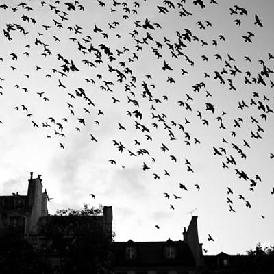 Black And White Paris Poster featuring the photograph Flock Of Bird Flying by Miles Lau