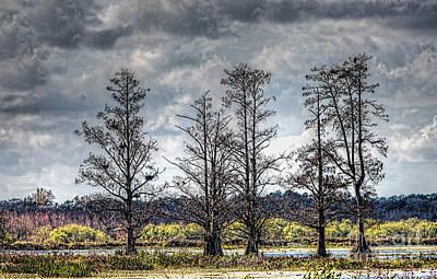 Florida Cypress Poster by Felix Lai
