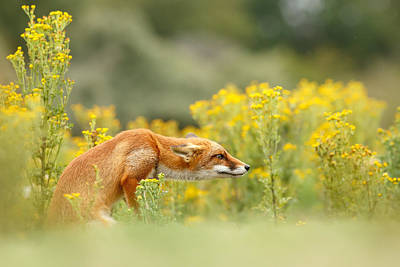 Flower Fox Poster by Roeselien Raimond
