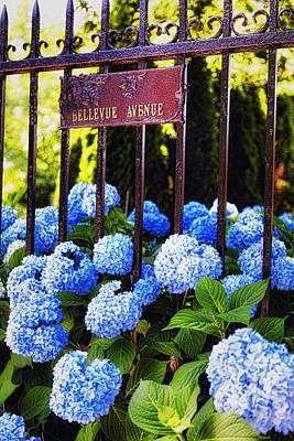Flowerheads  In Newport Poster by George Oze