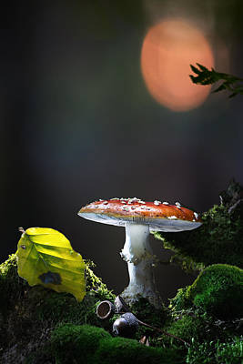 Fly Mushroom - Red Autumn Color Poster by Dirk Ercken